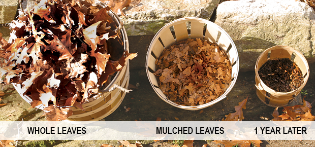 The Cyclone Rake leaf collecting system mulches your leaves better than just a leaf bagger.